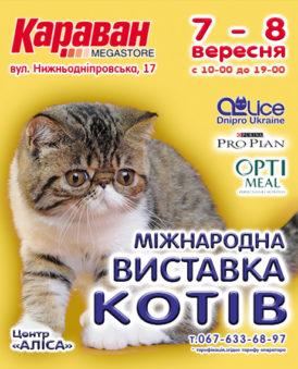 """Міжнародна виставка котів в ТРЦ """"Караван"""""""